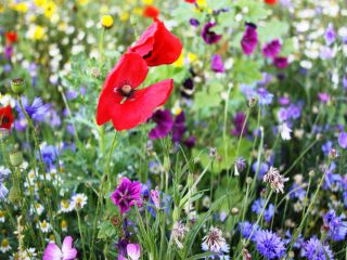 Speciaalmengsel 37 - bloemenpracht