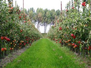 Fruitmat