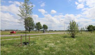 Biodiversiteit in Nederlandse bermen groeit