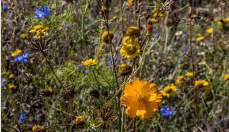 'Er wordt nog weinig gespeeld met natuur in de tuin'