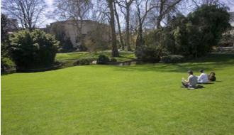 Grassen op nummer één in het openbaar groen