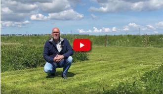 Veldbloemenupdate: de inheemse Staygreen mengsels