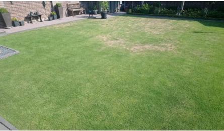 Actueel: ongewenste grassen in opkomst in het gazon