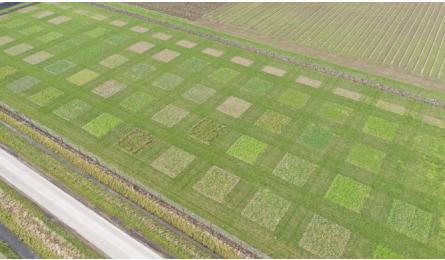 Video: groei veldbloemen bij najaarszaai