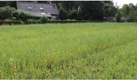 Onkruid in veldbloemen - wat te doen